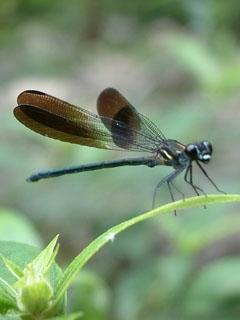 世界,蜘蛛蜻蜓我的蜜蜂动画片