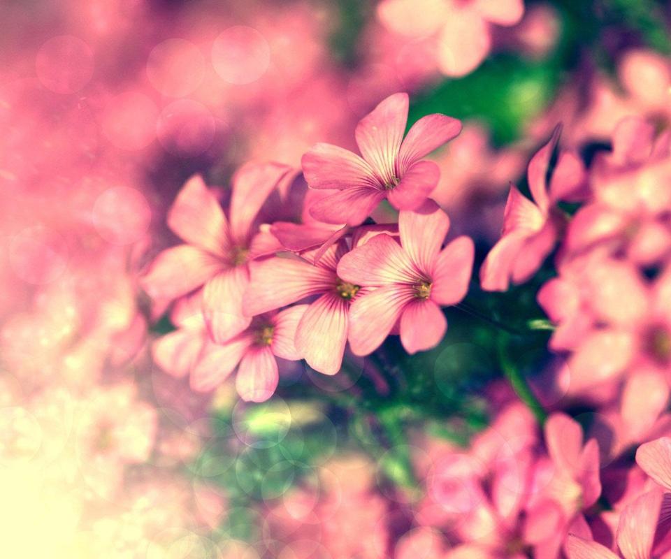 花朵图片唯美-花朵图片头像大全唯美|鲜花美图片|小清新花朵图片|最