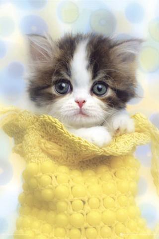 超萌猫咪壁纸