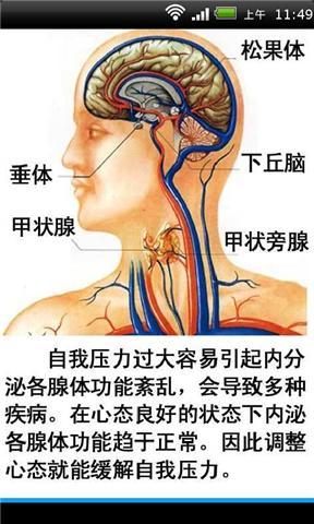 最全人体器官构造图解