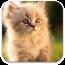 宠物歌曲 音樂 App LOGO-硬是要APP