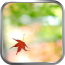 秋枫-绿豆动态壁纸