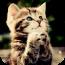 可爱的小猫照片 攝影 App Store-癮科技App