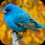 鸟类图库 攝影 App LOGO-硬是要APP