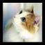 攝影App|可爱的猫的照片 LOGO-3C達人阿輝的APP