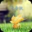 沐青枫 通訊 App LOGO-硬是要APP
