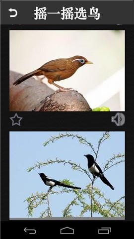 鸟类分类大全