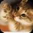 可爱猫咪动态壁纸 攝影 App Store-癮科技App