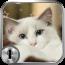 布偶猫一键锁屏 程式庫與試用程式 App LOGO-APP試玩