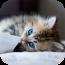 精美手机壁纸 個人化 App LOGO-APP試玩
