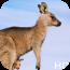 澳大利亚高清动态壁纸第一季 個人化 App LOGO-APP試玩