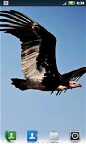 大鸟飞行壁纸