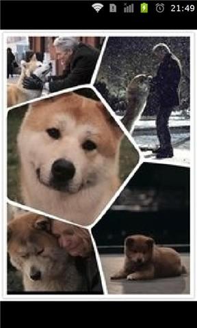 忠犬八公唯美图片