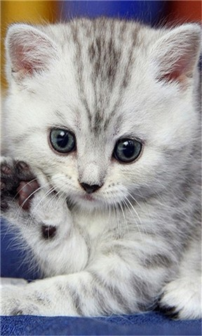 可爱猫咪壁纸