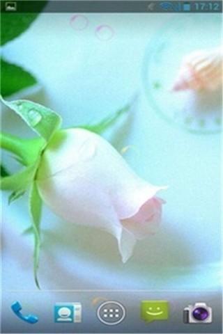 情人玫瑰动态壁纸