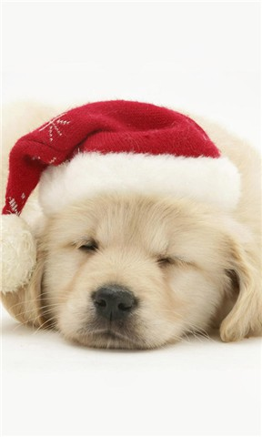 可爱狗狗壁纸合集
