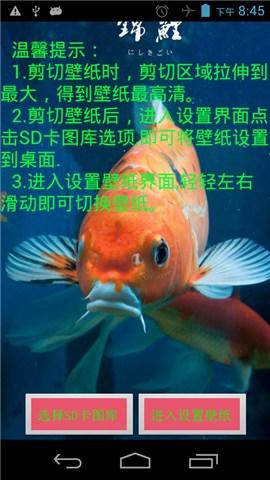 唯美锦鲤动态壁纸